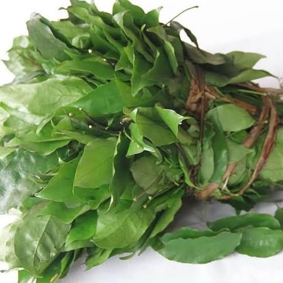 Okazi leaf Okazi soup